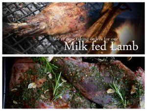 milk fed lamb box